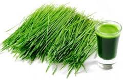 Wheat Grass Tip
